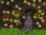 Альметьевск: Щенки питомника Kentalivey Ждут своих владельцев очаровательные щенки китайской хохлатой собаки. Папа Кристал Яниры Екзотик– Юный Чемпион России, Чемп