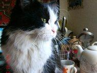 Кошка пропала в Ангарске в районе 93 квартала Переехали из Иркутска в Ангарск. Кошка пропала в Ангарске в районе 93 квартала. Взрослая, пушистая. Если, Ангарск - Потерянные