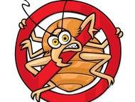 Челябинск: Избавиться от клопов, тараканов, клещей, грызунов Уничтожение насекомых и грызунов , Челябинск    Наша компания в короткий срок и на долгое время спо