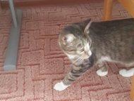 Екатеринбург: Отдам кошку Отдам кошку в связи с переездом. Возраст - 1 год и 4 месяца. Очень красивый окрас, зовут Рита. Кошка воспитанная, приученная к лотку, прив