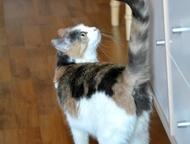Екатеринбург: Отдам ласковую трехцветную кошку Пристраивается в добрые руки, в квартиру, юная (1 год) трехцветная кошка Маришка. Кастрирована.   Ходит в лоток с нап