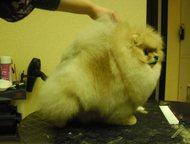 Гатчина: Стрижки собак в Гатчине Профессионал-парикмахер с многолетним опытом, предоставляет свои услуги для ваших питомцев. Качественно, ответственно: с любов