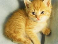 Ижевск: Котята в добрые руки Милые, добрые, игривые котята. Возраст 1, 5 месяца. Уже едят корм и все ходят в лоток с первого дня.