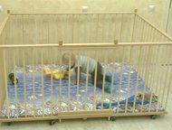 Тюмень: Манеж детский отечественный деревянный 1, 3х1, 8м с высокими стенками 80см Манеж на заказ с высокими стенками до 80см по индивидуальным размерам. Боль