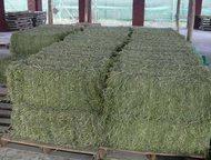Сено в тюках Продам сено в тюках 2015 года, первого сорта.   Размер тюка 50х40х85. Вес от 18 до 20кг.   Доставка по Москве и Московской области, самов, Москва - Корм для животных