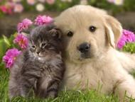 Дрессировка и воспитание собак в Набережных Челнах Дрессировка собак в г. Набережные Челны - методы воздействия на животных с целью выработать и закре, Набережные Челны - Услуги для животных