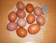 Продам яйца домашние куриные диетические Доставка бесплатно по г. Новомосковску в районе от 19 квартала до вокзала. Продукция без антибиотиков, красит, Новомосковск - Разное