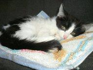 Тольятти: Котенок в добрые руки Отдам котенка девочку в добрые ласковые руки. К туалету приучена, очень добрая, ласковая, игривая. Ласковый пушистик ждет своих
