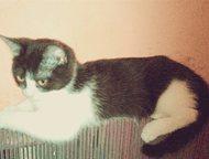 Киску отдадим в добрые руки Эта кошечка-котенок очень добрая, ласковая, не боится других кошек и котов , а на оборот находит с ними контакт , что не м, Тольятти - Продажа кошек и котят